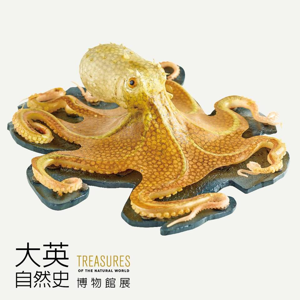 布拉希卡玻璃章魚