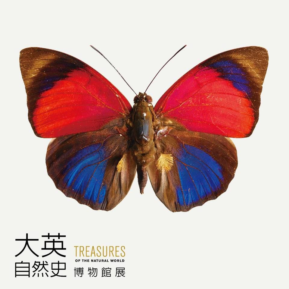 克勞蒂亞蝴蝶